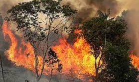 حرائق الأمازون تهدد رئة العالم.. تمد 20% من الكوكب بالأكسجين.. خسائر بيئية ضخمة.. وخبراء يحذرون من تزايد وتيرة الاحتباس الحراري
